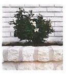Plants/Trees