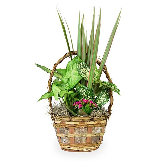 Small Basket Garden