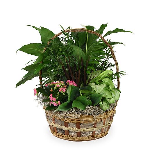 Deluxe Basket Garden