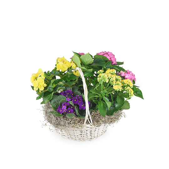 Blooming Basket
