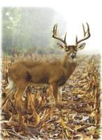Deer Memorial Folder