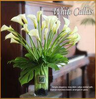 White Callas