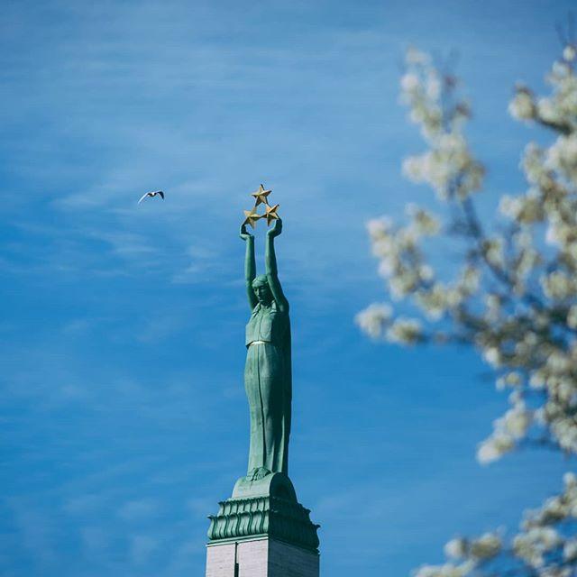 spring rigaoldtown rigainmycolours rīga riga patriotic monument liveriga latvia flowers brivibaspiemineklis bluesky bird bestoftheday bestofbaltics balticstates 4thofmay