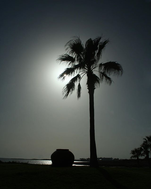cyprus palms black