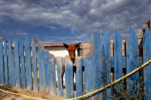 picketfence bluesky doggy dog fuerteventura majanicho