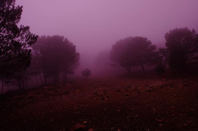 forest trees fog morninglight vanlife xt10 andalucia clouds mystical morning nationalpark nofilter spain fujifilm