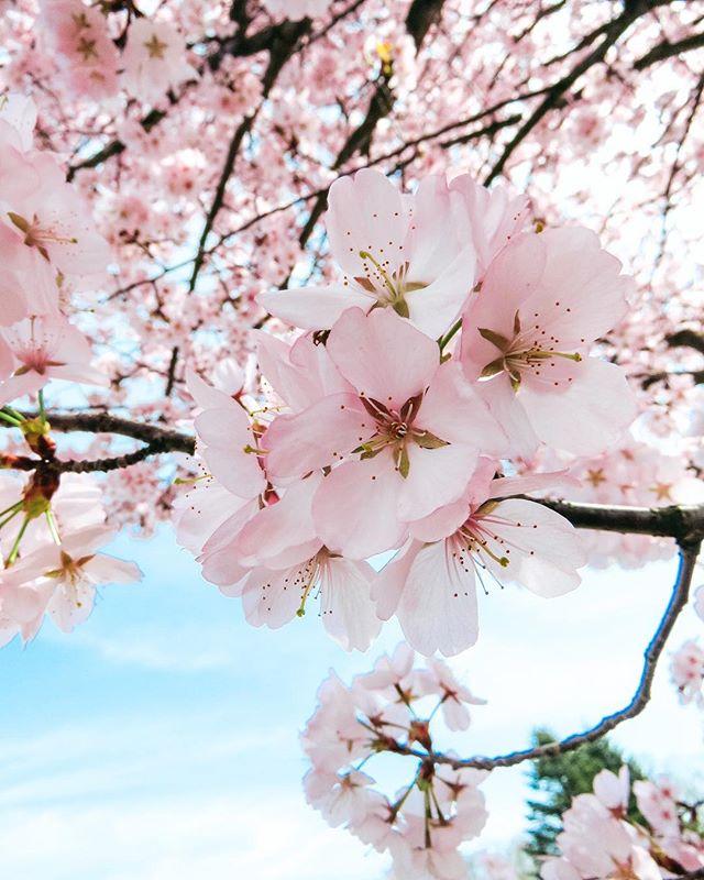 путешествие навстречуприключениям люблювесну инстаграмнедели инстаграм деревьявцвету взаимныелайки весна2018 весенниецветы весеннеепутешествие весеннеенастроение апрель2018 photographer like interestingworldroxi instagram followme followlike