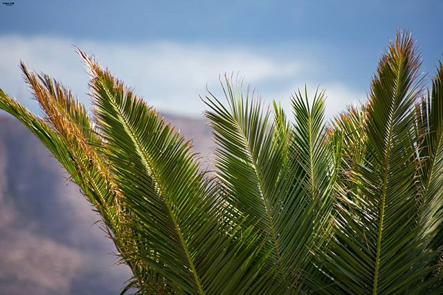 greenleaves🍃 palm nikond3400 photography_for_everyone vacation nikonphotography hobbyphotography palmleaves sky photography travel photographyisalifestyle andres_sokk_photography sunlight