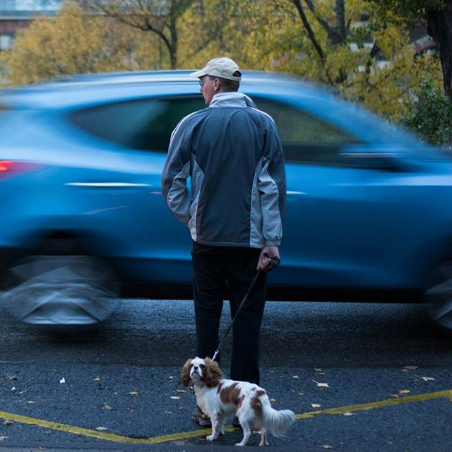 evening interaction danube done pet photography man vienna dog look photo rain pose rainy movement street framing urban weather awesome autumn park fast car pic