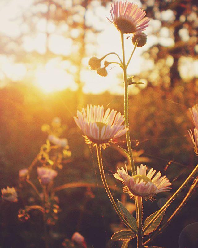 sunset ig_serbia nature wildflowers inthewoods forest sun instaflower instagramsrbija flowers