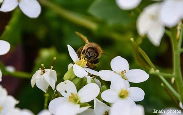 bee flowers instaphoto macro nature nikon photographer photography