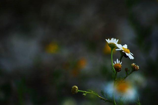mogyoros.photos photo: 2
