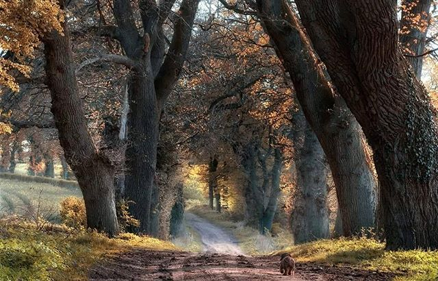 weg fotomarion allee landschaftsfotografie nikond300 herbstlaub herbst bäume nikontop_