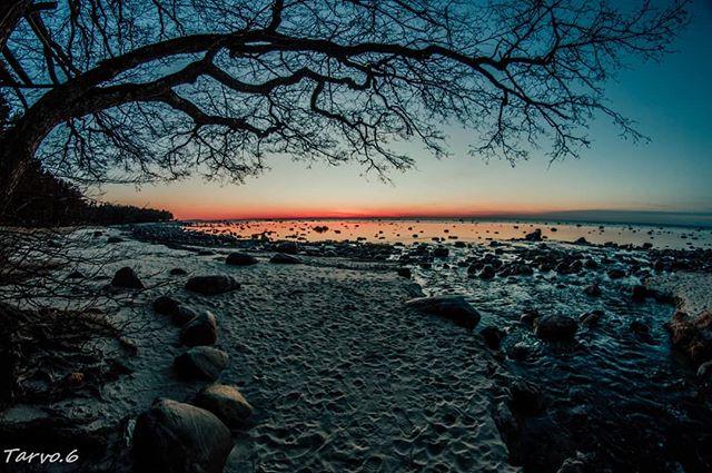 Tarvo Kuus photo 558400