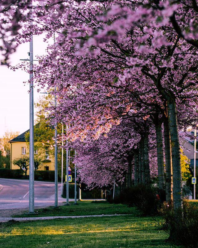 Tarvo Kuus photo 558405