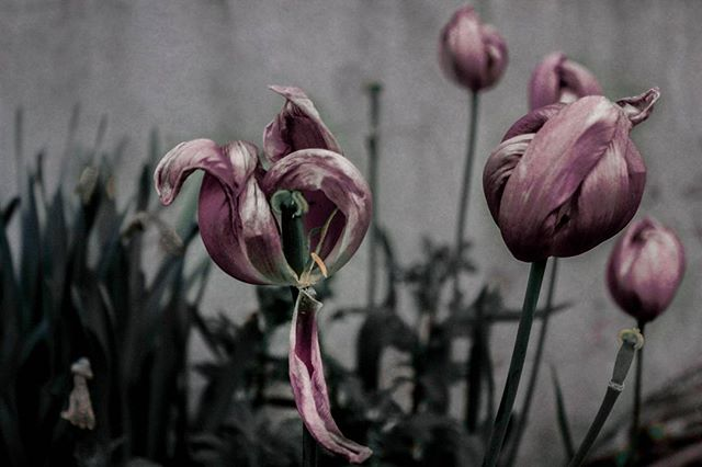 canongr floral love goth author feelings flowers lovewins beauty vsco autumn emotions fall hunk quotes nature instalove moments instalifo photography follow thoughts instagood shadows canon instadaily colors followme