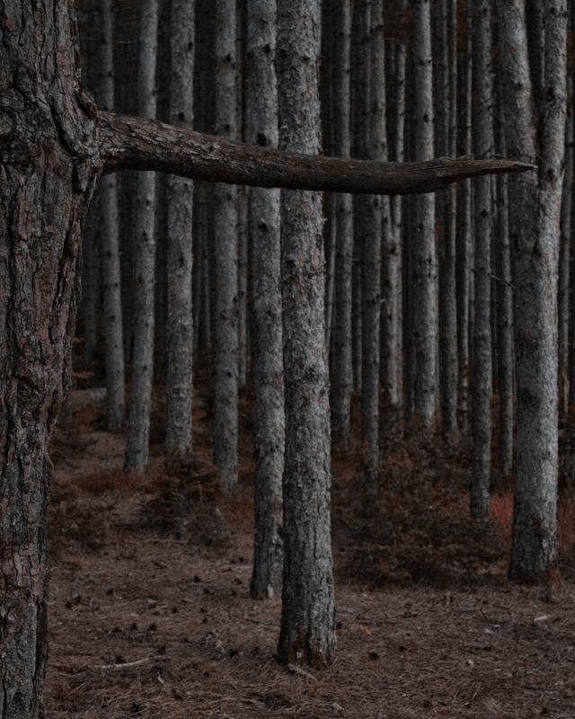 hot followme summer athens ioannina canon photography instadaily darkness art hiking instagood nature instalove beauty shadows dark instalifo woods beautiful forest follow goth skg trees vsco