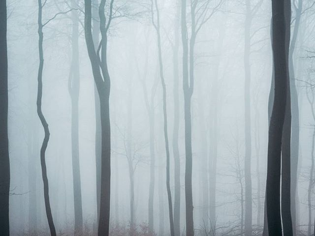 weroamgermany thevisualgrams the_folknature moodyforest moodnation minimalistic minimal lumixuk lumixg9 lumix_de landscapejoy ig_germany hpow germanroamers foggyday fog duffypics click_point awesome_photographers