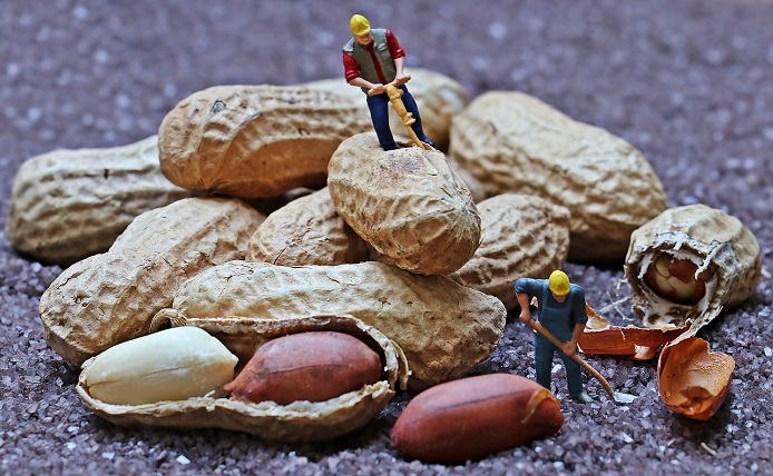 working for peanuts