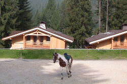 Home section 6 tab chaletsummerhorse