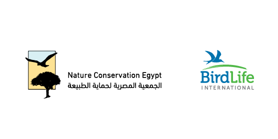 Nature Conservation Egypt