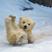 Cute baby polar bear day photography 14  880