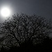 Baum mit mond in der nacht