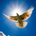 White doves flying wallpaper 3