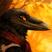 Crow 49