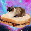 Cat sitting on peanut butter   jelly sandwich in outer space