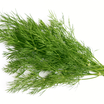 Bunch of dill istock