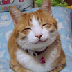 411px so happy smiling cat