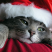 Santa kitty   copy