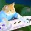 Drams cat
