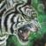 Tigers roar by morrokko