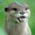 Osu profile pic