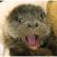 Otter250
