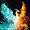Phoenix 22