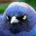 Duh bird