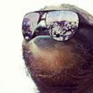 Sloth sunglasses