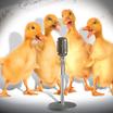 Patos musicos