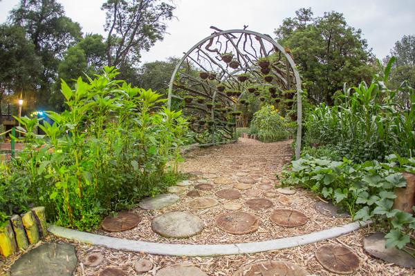 Jardín Botánico de Chapultpec en la CDMX
