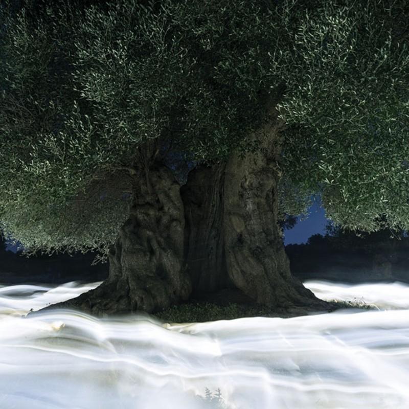 """Olive tree and light #2"" - Photograph by Ugo Ricciardi"