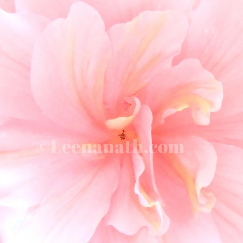 A Little Tear (Begonia Obliqua) 2018