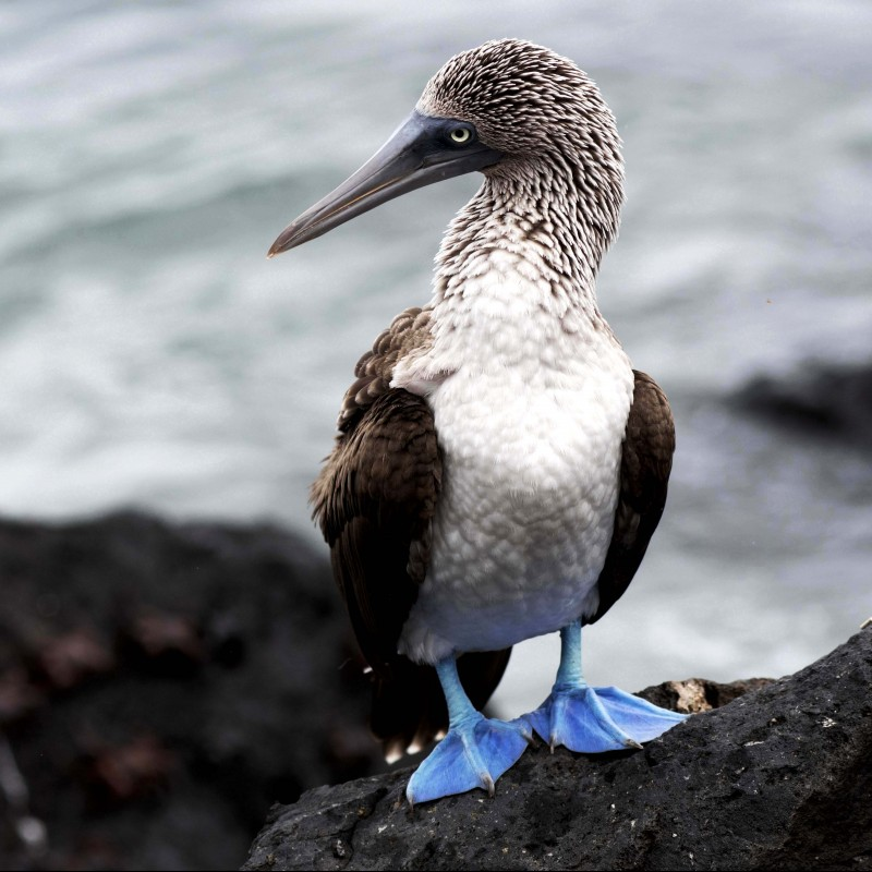 'Project Galapagos' by Enzo Barracco - Small Format Photograph Limited Edition 1/6, Photo No. 4