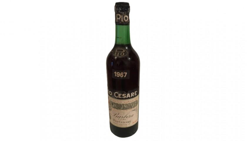 Bottle of Barbera d'Alba, 1967 - Pio Cesare