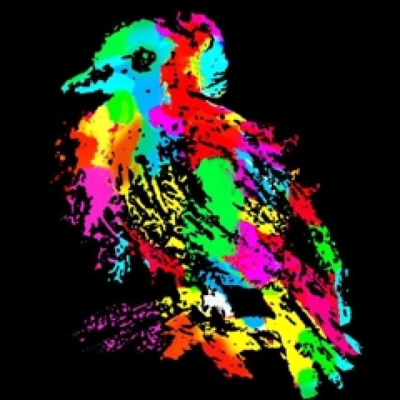 """""""Dove"""" di Thomas Hussung"""