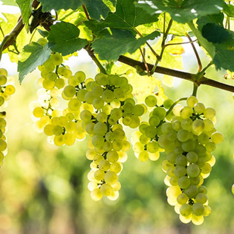 Bottle of Premium Brut Sparkling Wine Along With a Vineyard Tour and Tasting Voucher