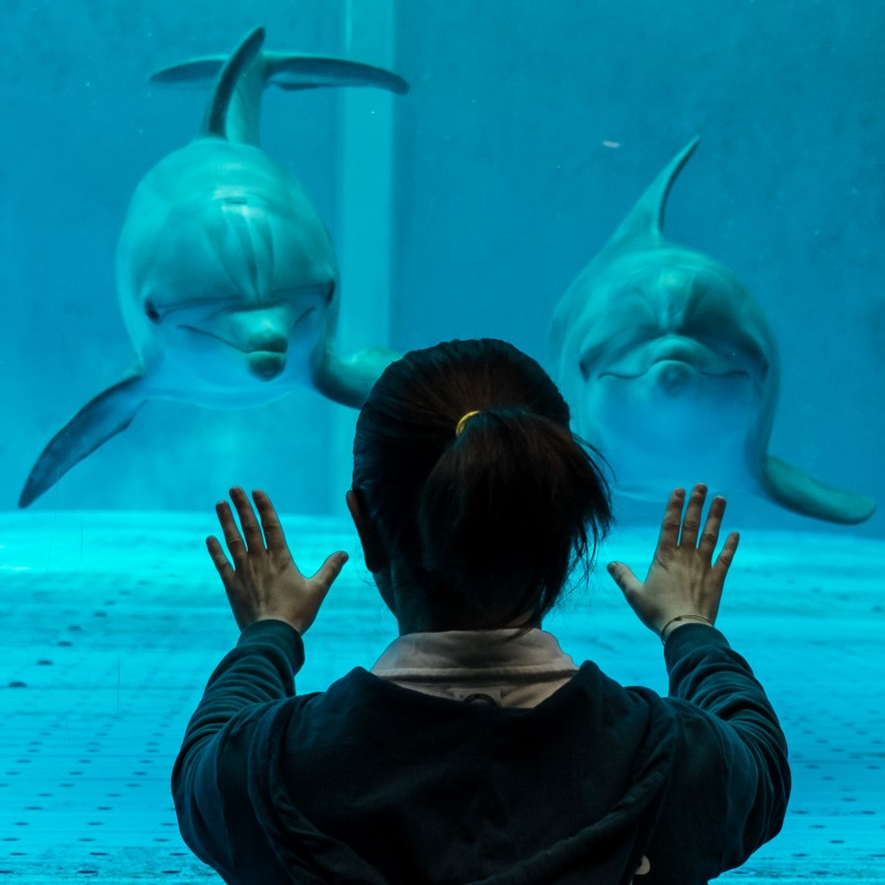 Private Tour of the Genoa Acquarium for Two