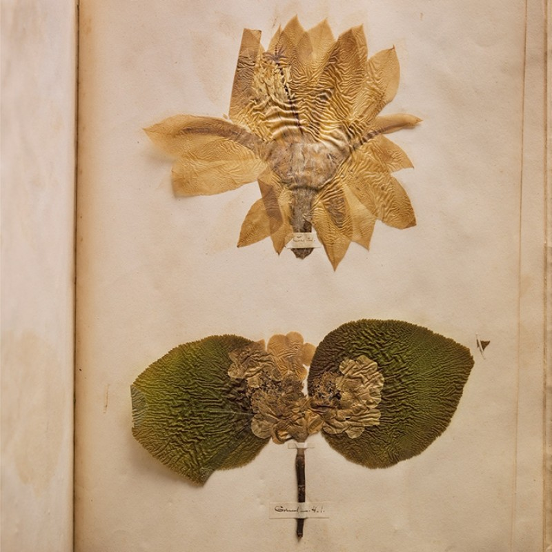 """""""Emily Dickinson's herbarium"""" by Annie Leibovitz"""